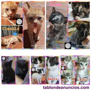 Gatitos de 2 meses en adopción