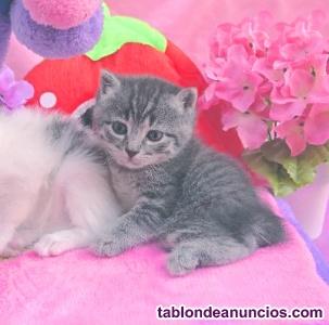 Gatitos atigrados de varios colores en adopción