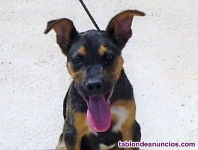Gaston,cachorrete en busca de hogar en adopcion