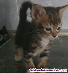 Se vende preciosa gatita totalmente sana.