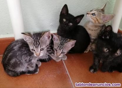 Gatos en adopción pontevedra