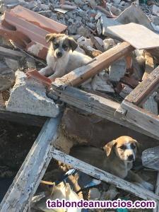 Regalo cachorros de 2 meses, cariñosos y juguetones han