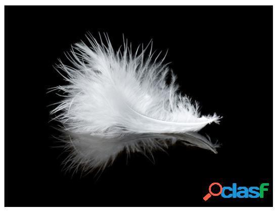Artgeist Fotomural White Feather 200x154 cm