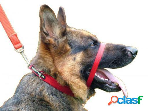 Canny Dog Collar para Perros Rojo T-7