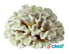 Ferplast Coral Blanco Blue 9131 19.5x19.5x8.5 cm