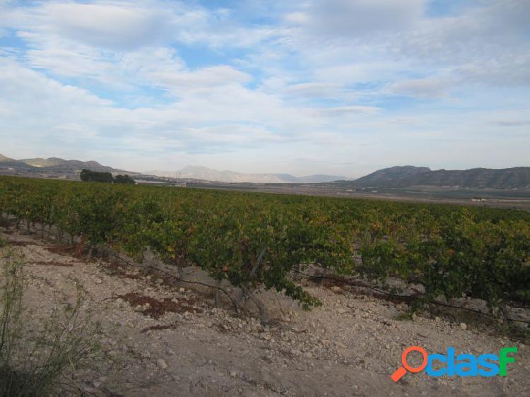 Parcela de 11736 m2. plantada de viña Merlot en espaldera.