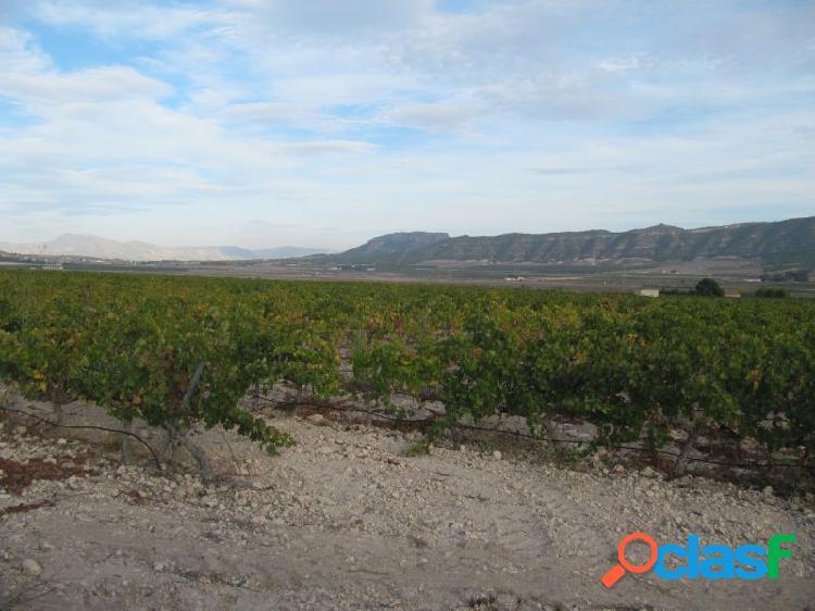 Parcela de 24062 m2 plantada de viña merlot en espaldera.