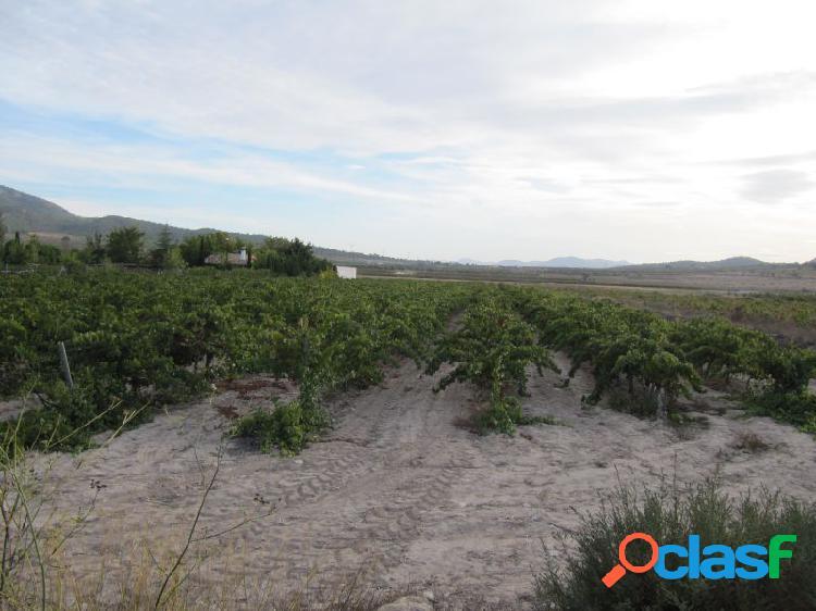 Parcela de 8888 m2 plantada de viña cabernet sauvignon en