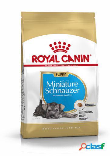 Royal Canin Miniature Schnauzer Junior 1.5 Kg