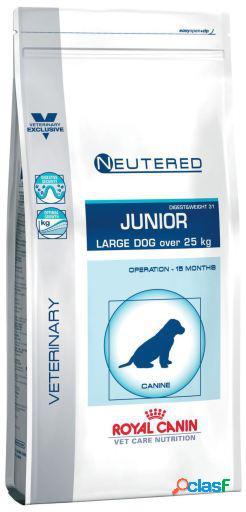 Royal Canin Pienso Neutered Junior Large Dog 4 KG
