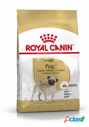 Royal Canin Pienso Pug Adult 3 Kg