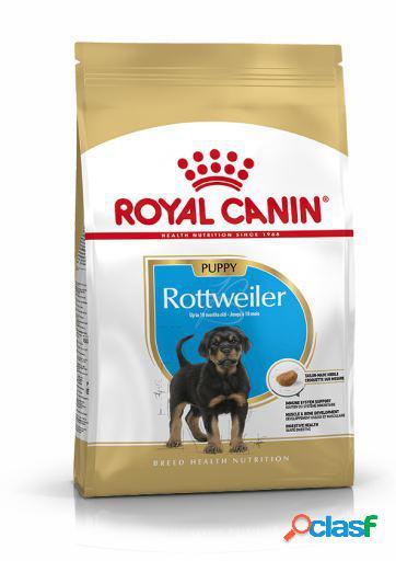 Royal Canin Pienso Rottweiler Junior 12 KG