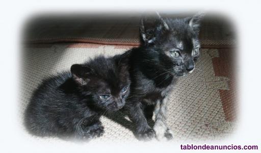 Se regalan dos gatitos
