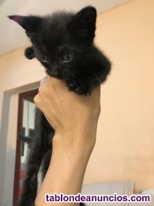 Regalo / doy en adopción a gatitos