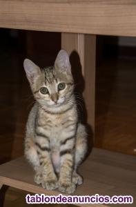 Regalo gatito inmunizado