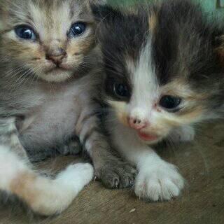 regalo para persis gatito en adopción