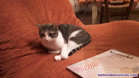 Regalo gato por mudanza