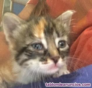 Regalo gatitos con un mes