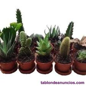 Vendo cactus de hasta 1 metro, precio a convenir, con su