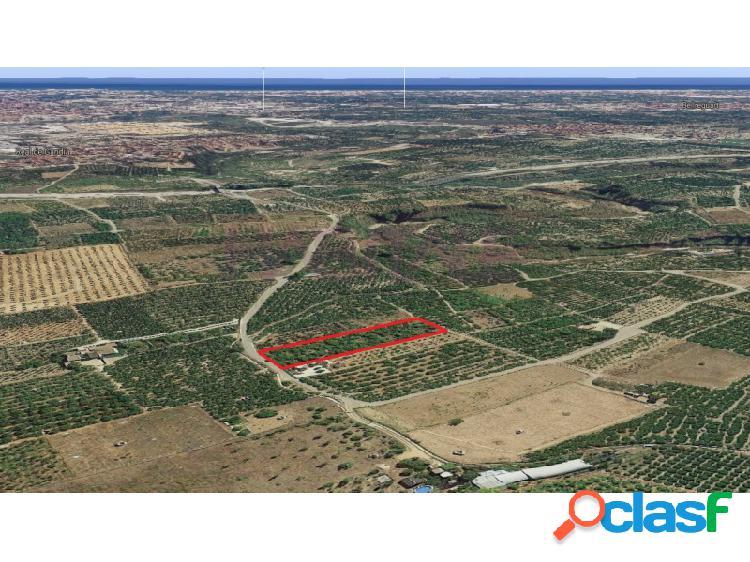 Campo de naranjos en Real de Gandía