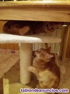 Regalo 2 gatitos de 4 meses, cariñosos, encantadores