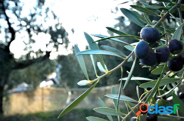 Finca Rustica con olivos y agua cerca del pueblo de