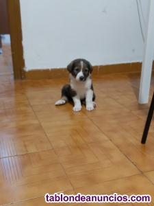 Regalo mascota de 2 meses