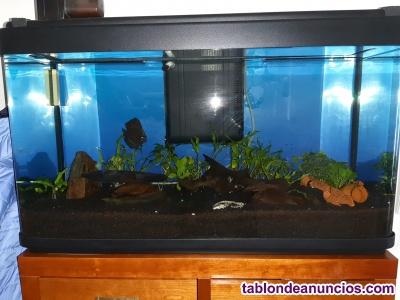 Vendo acuario completo con pez disco