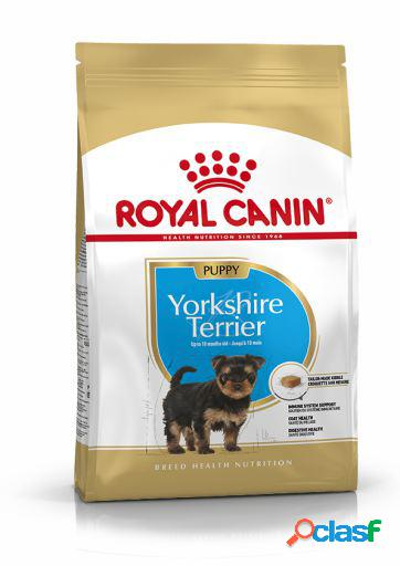 Royal Canin Pienso Yorkshire Terrier Puppy 1.5 Kg