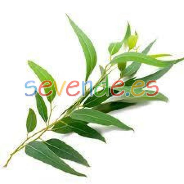 Aceites Eucaliptus SAC 10 ml