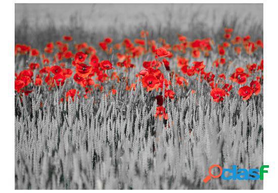 Artgeist Fotomural Amapolas rojas en trigo blanco y negro