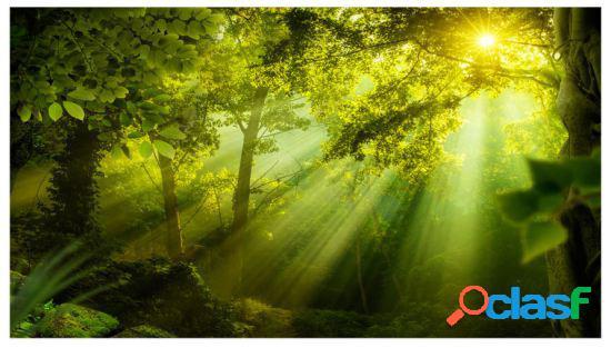 Artgeist Fotomural Xxl In A Secret Forest Ii