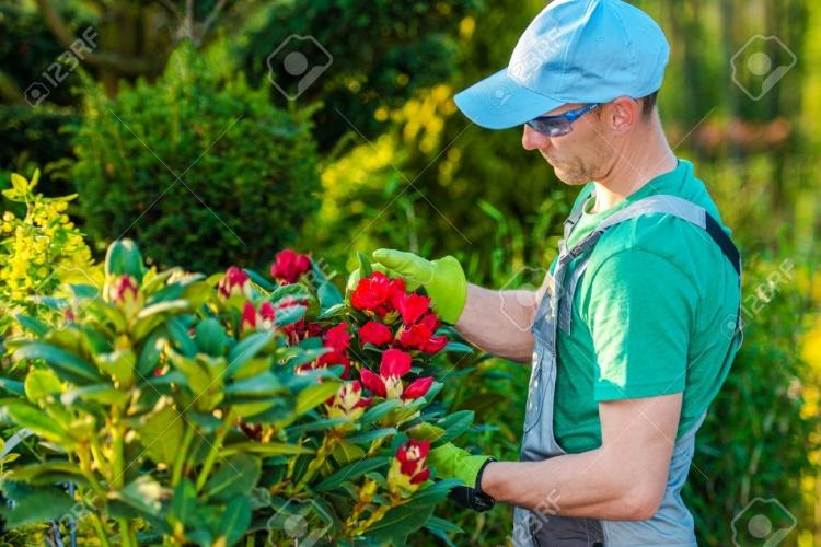 El Jardinero Fiel. Persona responsable y con ganas