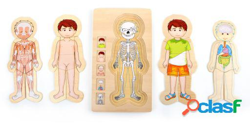 Legler Puzzle anatomía Tim