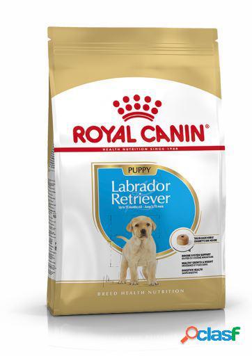 Royal Canin Pienso Labrador Retriever Junior 12 KG