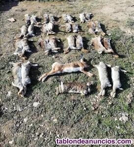 Coto de caza menor