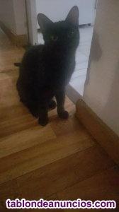 Estrella. Gatita negra en adopcion.