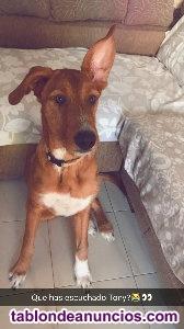 Regalo perro en adopción