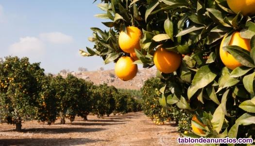 Trabajo en el campo naranja mandarina