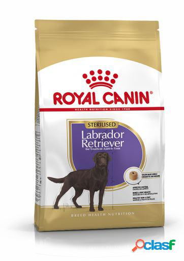 Royal Canin Pienso Labrador Retriever Adulto Sterilised 12