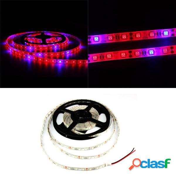 1M 2M 3M 4M 5M 3: 1 5050 SMD LED Impermeable Hidropónico