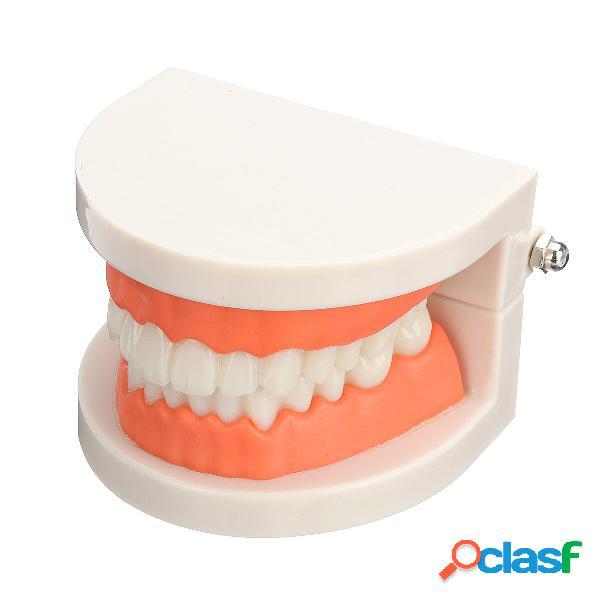 Dientes dentales Médico Modelo Cepillado Práctica de hilo