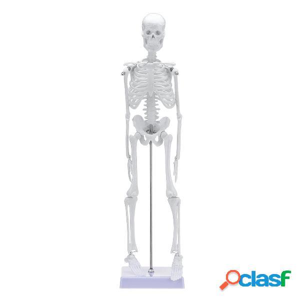 Esqueleto de anatomía anatómica humana de 45 cm Médico