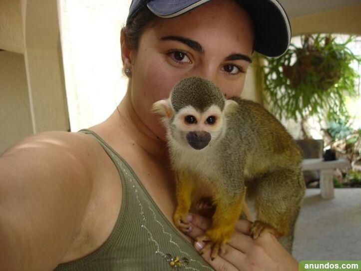 66compre monos y bebés chimpancés como mascotas