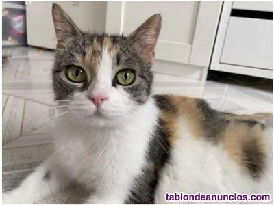 Maisha (nacimiento marzo ) gata en adopción madrid