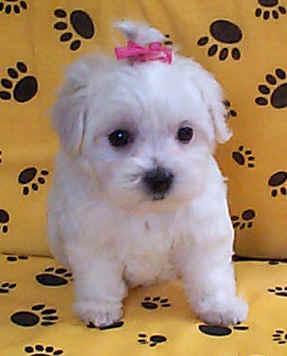 cachorros mates machos y hembras para adopción