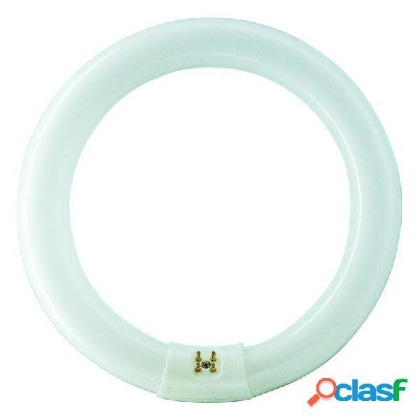 Philips TL-E Circular Super 80 40W 840 (MASTER) | Blanco