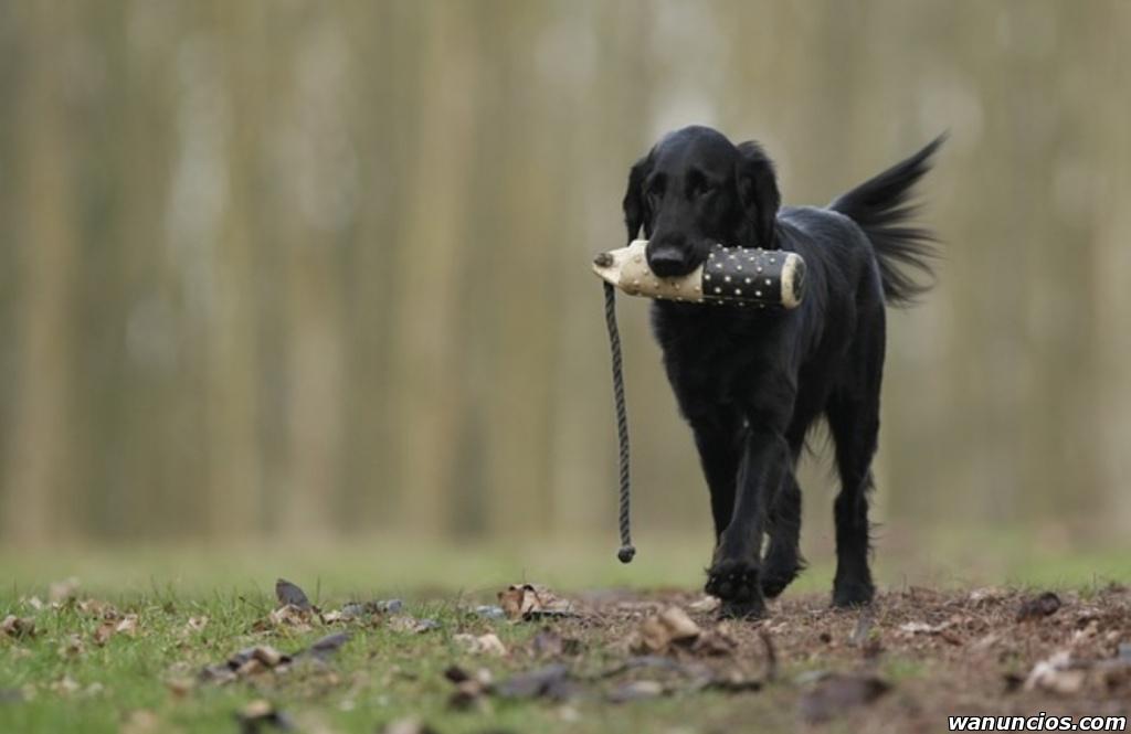Que hacer para que obedezca tu perro - Álava