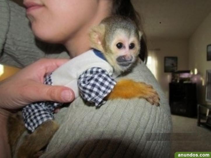 Tenemos monos capuchinos, monos ardilla, monos sipder,