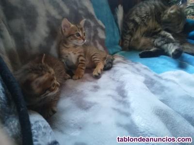 Regalo gatito y gatita de un mes